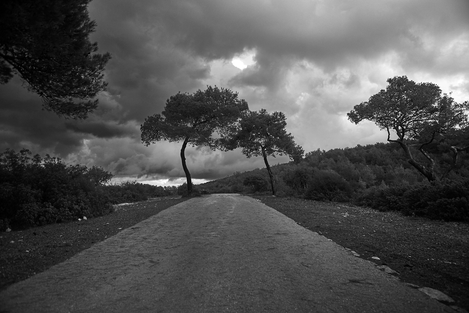 Tom Gavish -  Photography